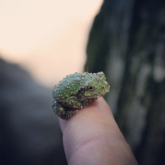 Baby frog.