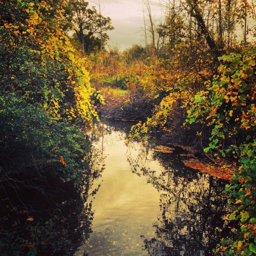 Ann Arbor Matthaei Botanical Gardens and Nichols Arboretum