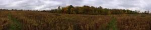 LeFurge Woods Nature Preserve