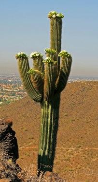 Arizona 3