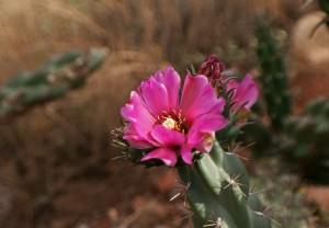 Arizona 13