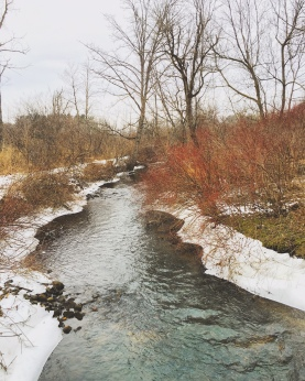 Botanical Gardens - Ann Arbor